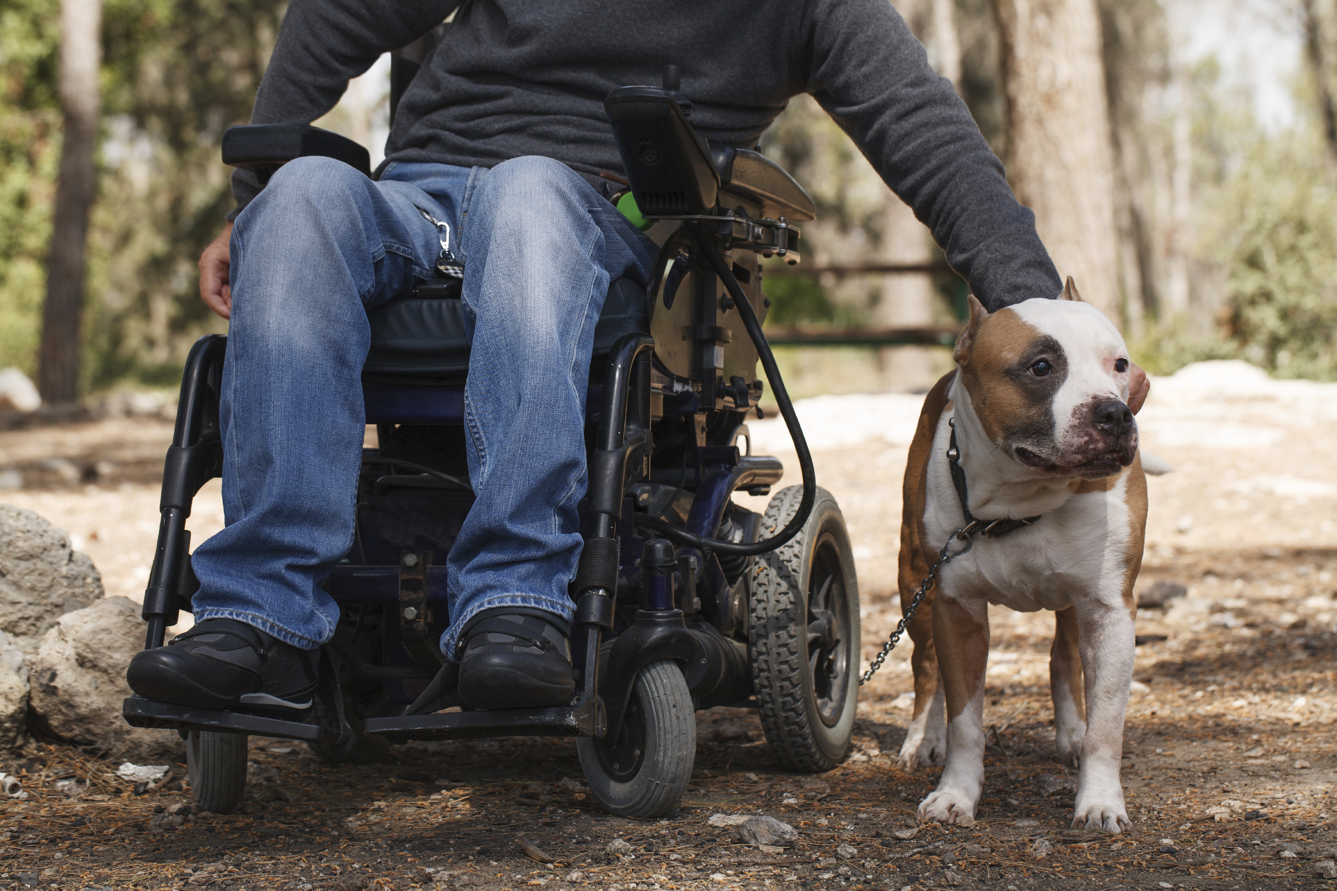 Young man in a wheelchair with his faithful dog walk in the park